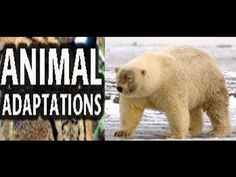 ▶ Animal Adaptations for Kids -Lesson with Quiz - YouTube