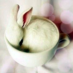 A bunny in a tea cup!