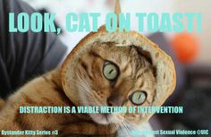 Cat videos aren't just the quirky hobby of Generation Y, but a source of wealth and fame. Could your moggy be a potential cash cow? Funny Cat Memes, Funny Cat Videos, Funny Cat Pictures, Funny Cats, Hilarious, Lol So True, Cat Bread, Bread Art, Gatos Cat