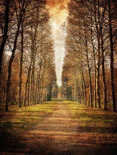 ✯ Path in the Woods - Versailles, France