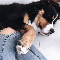 This cute corgi puppy will bring you joy. Dogs are awesome friends. Cute Puppies, Cute Dogs, Dogs And Puppies, Doggies, Animals And Pets, Baby Animals, Cute Animals, I Love Dogs, Puppy Love