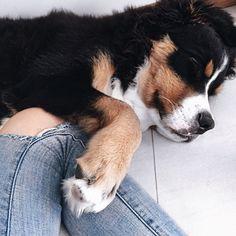 Imagen de dog, animal, and cute