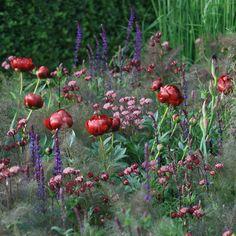 Garden Design by Carolyn Mullet fényképe.