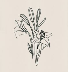 'liliums' drawing by tana latorre for paloma wool.