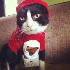 Photo by aaronbagley #cats #costumes #ET #halloween