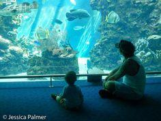 Noumea Aquarium