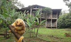 Rara Avis Rainforest Lodge and Reserve