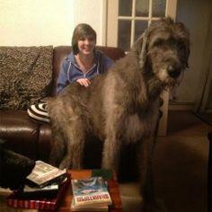 fotos acompaados de nuestro perro gigante