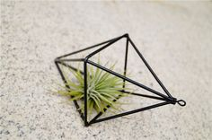 Doube+Diamond+Stand+for+Tillandsia+Ionantha+Hanging+Planter+Geometric+Air+Plant+Hanger This++Hanging++do+not+include+Airplant.+ Materials:+Iron Color:+Black Design:+Geometric+ Shape:+Double+Diamond Pls+be+a+patient,+because+all+.