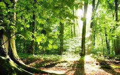 La natura è il nostro più grande alleato