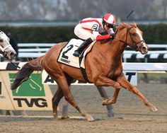 Leave the Light On shines in the Remsen Stakes at Aqueduct to earn 10 points toward the 2015 Kentucky Derby!