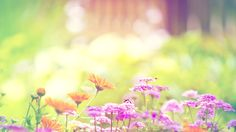 Pretty Flowers Backgrounds Tumblr