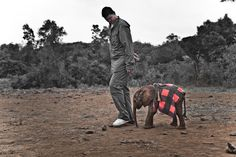 Photo by Kristian Schmidt for WildAid    Yao Ming and a baby elephant. This is a pic from the basketball star's recent trip to an elephant orphanage. Poor little elephants like two-week-old Kinango are here because their mothers are poached for ivory.