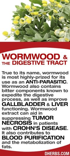 Wormwood & the digestive tract.