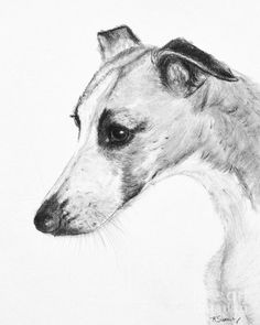 Whippet Painting - Elegant Whippet by Kate Sumners Dog Face Drawing, Animal Drawings, Art Drawings, Greyhound Art, Italian Greyhound, Whippet Dog, Black And White Dog, Grey Hound Dog, Whippets