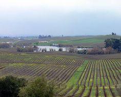 Beer Bar, Ava, Vineyard, Wine, Outdoor, Artists, Outdoors, Vine Yard, Vineyard Vines