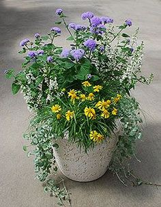 Container Gardening Idea 16 - Full sun. This website gives lots of ideas and lists all of the plants in each image. Very useful.