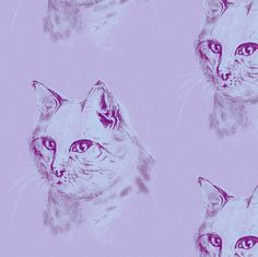 HAND DRAW CAT with black pencil on Mauve background fabric by paysmage on Spoonflower - custom fabric