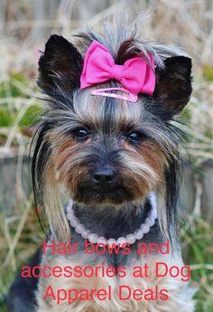Disney pet names funny 37 Ideas Top Girl Dog Names, Funny Girl Dog Names, Pet Names For Dogs, Cool Pet Names, Small Dog Names, Dog Names Unique, Best Dog Names, Puppy Names, Cool Dog Names Girls