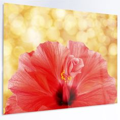 """DesignArt Floral 'Hibiscus Flower with Lit-up Background' Photographic Print on Metal Size: 12"""" H x 28"""" W x 1"""" D"""