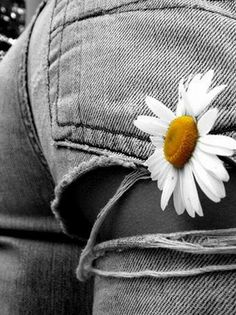 Passion for life. Daisy Love, Love Blue, Black N White, Black White Photos, One Color, Color Pop, Splash Photography, Fashion Photography, Passion For Life