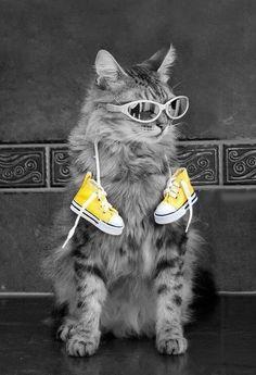 Cool Cat! ♥