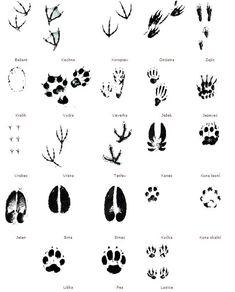 Stopy některých druhů zvěře Animal Tracks, Zoology, Educational Toys, Crafts For Kids, Survival, Animals, Fashion Painting, Crafts For Children, Animales