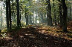 Lasy rudzkie.Góra Zamkowa (Schlossberg) koło Jankowic.