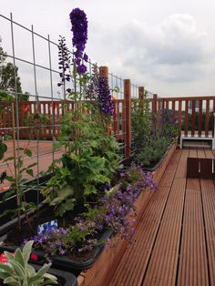 68 Ideas For Garden Rooftop Home Rooftop Terrace Design, Rooftop Garden, Balcony Garden, Roof Deck, Christmas Decorations To Make, Garden Paths, Outdoor Living, Planters, Landscape