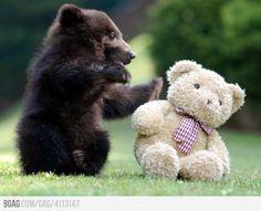 Black Bear Meets Teddy Bear. So cute.