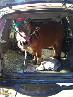Mini Vans, Horse Humor, Mini Horses, Pony Rides, Horse Quotes, Ponies,  Animal, The Future, The O'jays