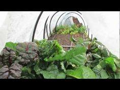Winter Growing Vegetables
