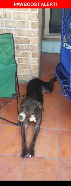 Is this your lost pet? Found in Corpus Christi, TX 78413. Please spread the word so we can find the owner!  Black pitbull, no tags, very friendly female. Not microchipped. She was take to VCA to be checked out.   Near Hunt Dr & Fox Run Dr