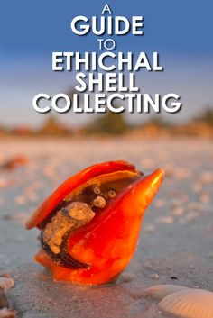 Love collecting sea shells? Check out this handy guide to ethical sea shell collecting