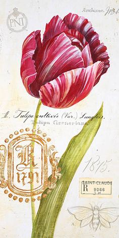 Printable image for decoupage and transfer purposes - Tulip – Angela Staehling
