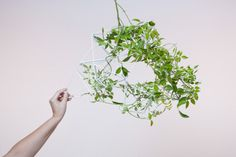 PARRAMYD  (Indoor structure for plants, 2012)  Crawling and hanging plants often stay outdoors because we are incapable of taming their growth inside our homes and office enviroments.  PARRAMYD is a modular system consisting of pyramidal elements that connect to each other. Thus, we can create a structure that guides the way a plant grows. The elements come in two different sizes and its use is very intuitive.