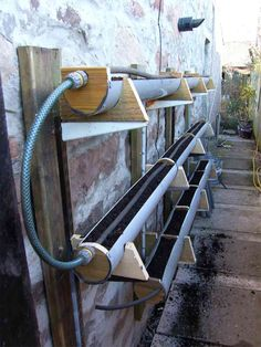 Rain gutter gardening. I love this idea!