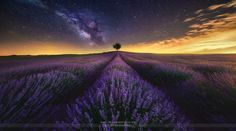 Photo The Lavender Field and Milky Way by Jesús M. García © on 500px