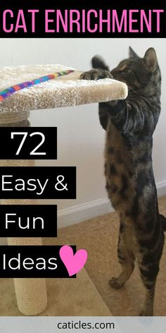 Cat Enrichment DIY is crucial for cats. Cat supplies that every pet parent needs and how to get your cat active. Learn how to provide mental stimulation. Healthy Cat Food, Best Cat Food, Dog Enrichment, Diy Cat Tree, Chesire Cat, Cat Hacks, Kitten Care, Cat Care Tips, Cat Supplies