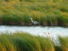 Camargue sauvage  - Bing Images