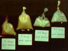 Anatomy & Physiology: Milk Composition
