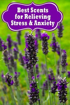 Best Scents for Relieving Stress & Anxiety