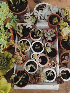 Vsco, Succulents, Plants, Flora, Succulent Plants, Plant, Planting