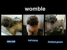 The first uploaded photo to Mr Pinks.  His name is Womble and the photo is from the 5th January 2013