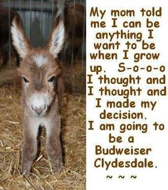 When I grow up, I am going to be a Budweiser Clydesdale! Animals And Pets, Baby Animals, Funny Animals, Cute Animals, Animal Funnies, Animal Babies, Equine Photography, Animal Photography, Beautiful Horses