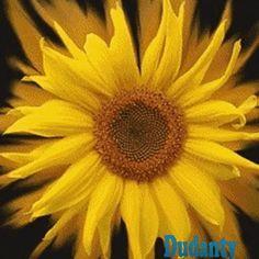 Novas folhas, novas flores, na infinita benção do recomeço. Chico Xavier