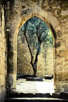 The sacred tree's appearance was deciving to say the least, but the soft hum, and the vibration in the air let you know there was magic present.