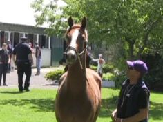 California Chrome arrives at Belmont, and we hear what Asst. Trainer Alan Sherman has to say about the trip up from Pimlico, as well as NYRA's decision to allow California Chrome to wear nasal strips.