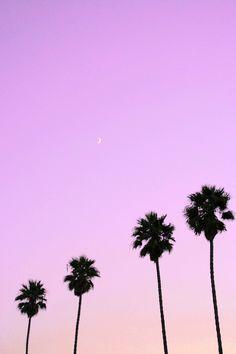 Lilac palm trees #palmiers #palms #lilac #sunset #sunrise #beach #plage