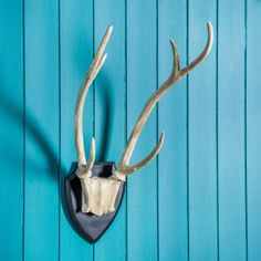 Large Resin Antlers - Him - Gifts For... - Christmas